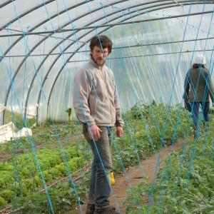 installation fils tomates